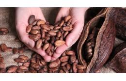 Какво представляват Какаовите зърна? Здравословни ползи и употреба.